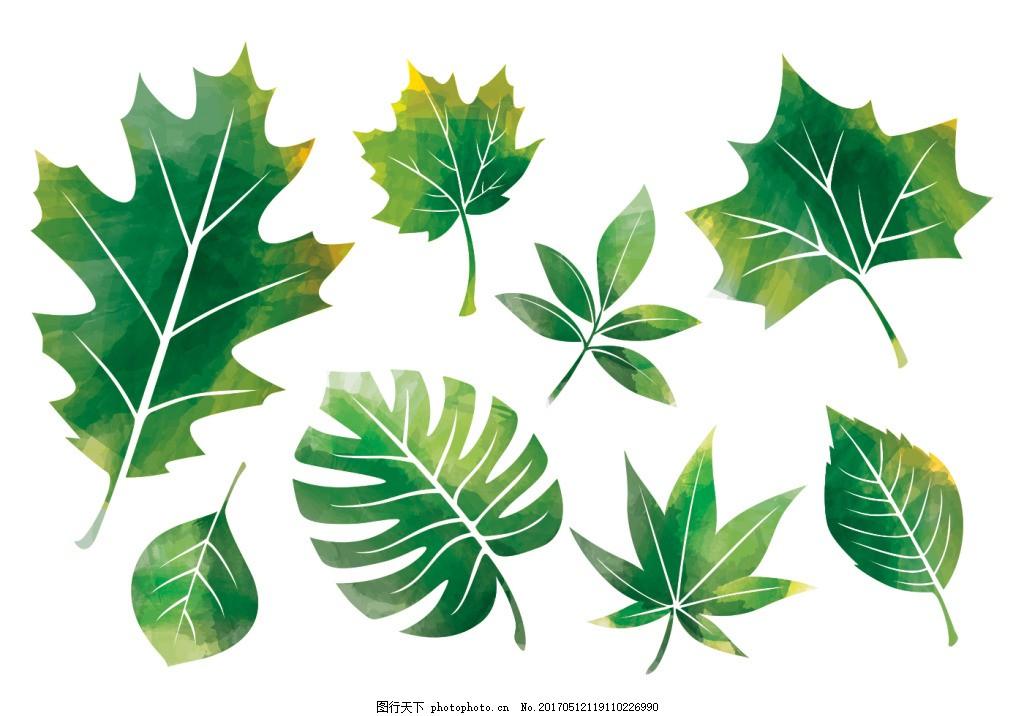 手绘水彩树叶素材