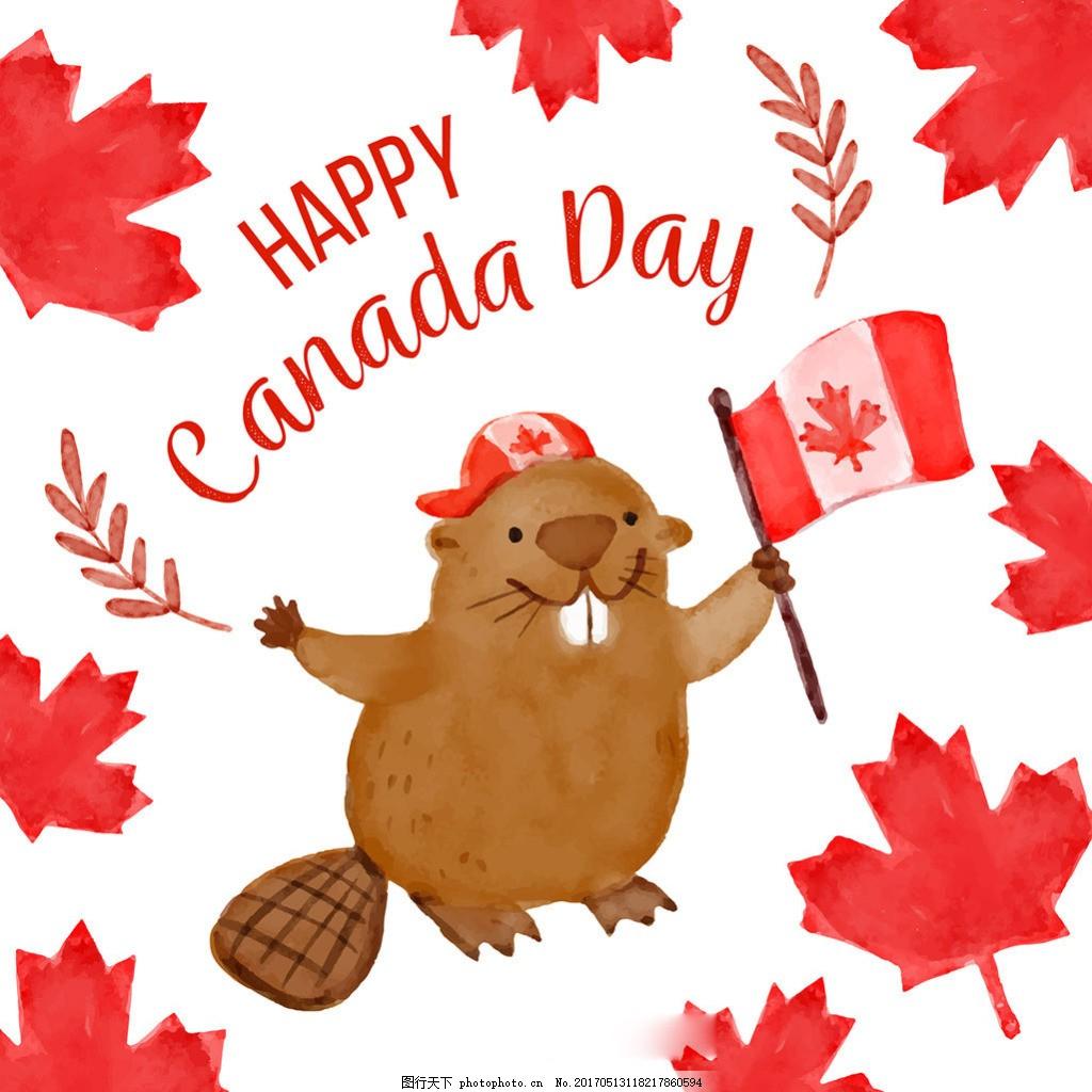 可爱的海狸加拿大国庆日水彩枫叶背景