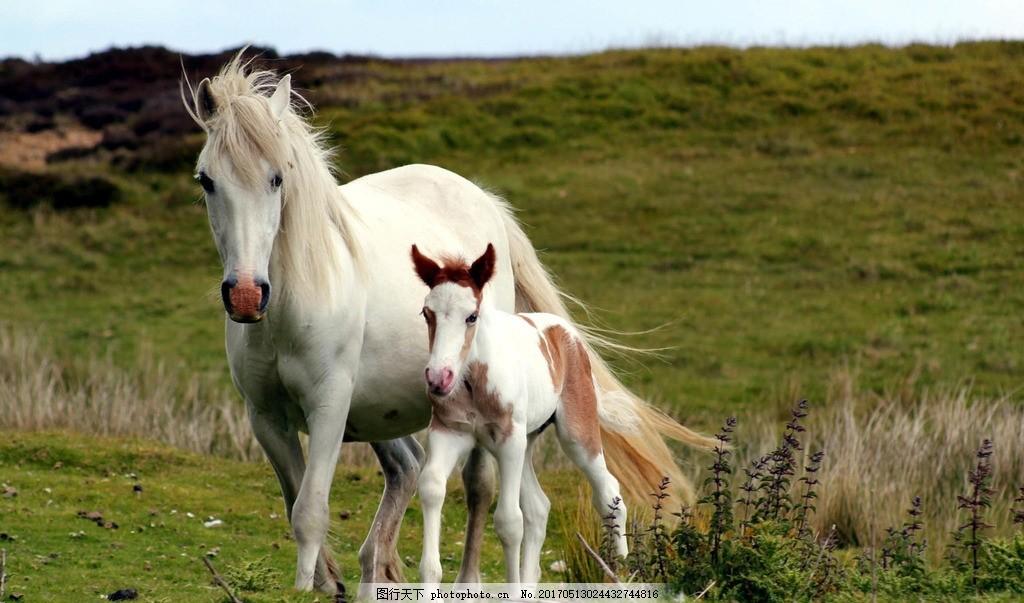 马 动物 骑行 奔跑 白色 马 摄影 生物世界 野生动物 72dpi jpg