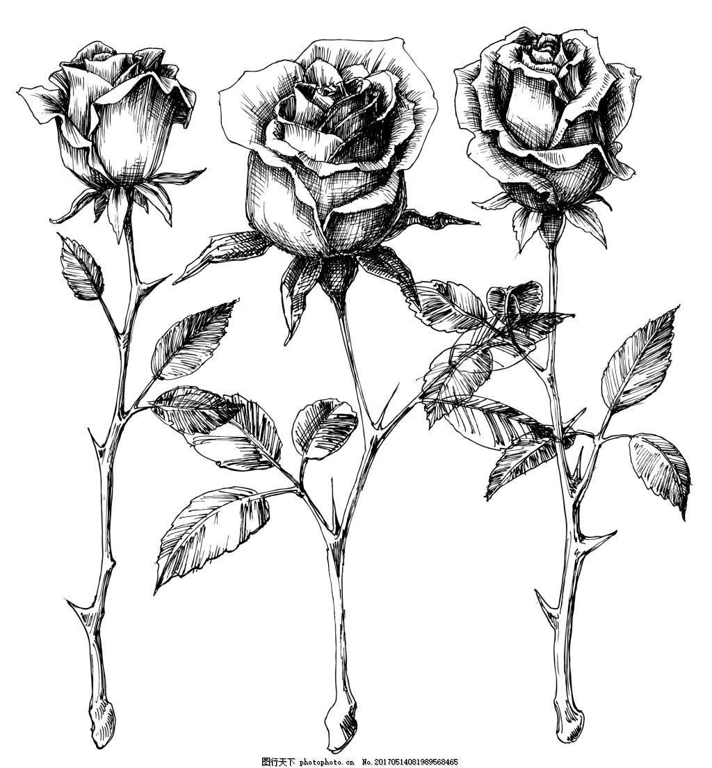 手绘黑白玫瑰