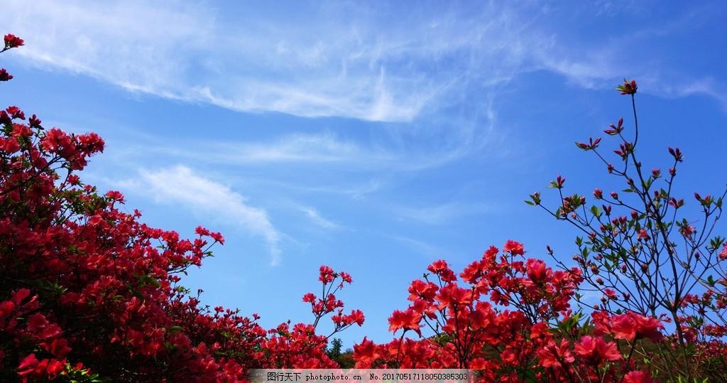 红杜鹃 湖南省 浏阳市 大围山 杜鹃花节 风景 风光 赏花 摄影