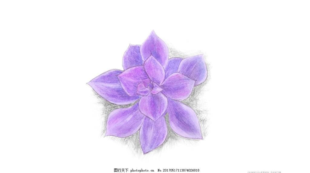 彩铅花朵 紫色花朵 手绘 彩铅手绘 铅笔手绘 多肉 紫色多肉 文化艺术