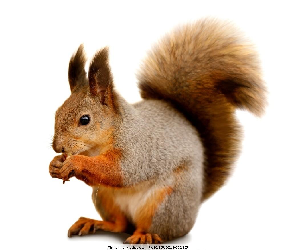 松鼠 动物 雪景 小松鼠 可爱的小松鼠 可爱 卖萌 萌萌哒 高清动物