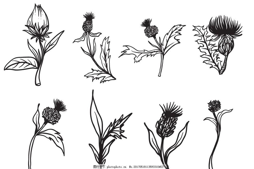 手绘花朵 花 花朵 素描 美丽的花朵 康乃馨 手绘康乃馨 鸡冠花 手绘