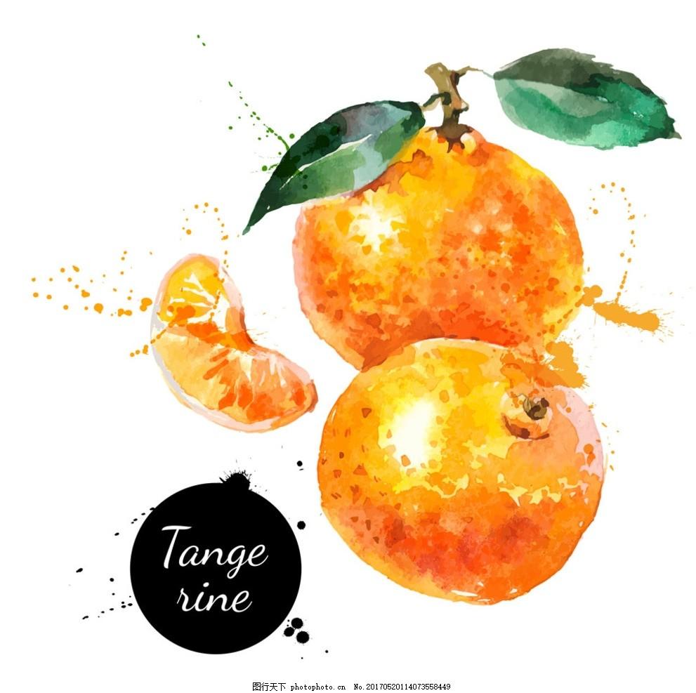 橘子 橙子 手绘橙子 水果 手绘水果 水果食品 洋葱 美味水果 木瓜