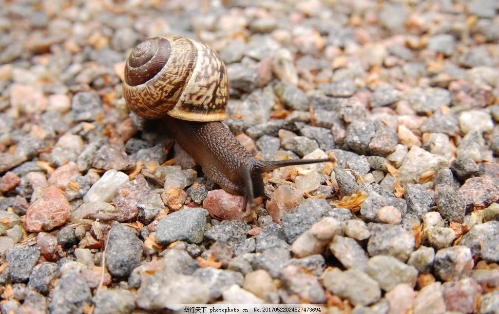 蜗牛 小动物 昆虫 蜗娄牛 水晶螺 驼包蜒蚰 爬行动物 软体动物 腹足纲