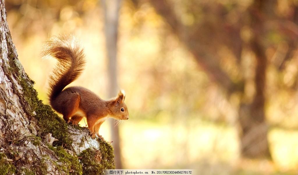 松鼠 小动物 可爱的松鼠 阳光下松鼠 森林动物 摄影