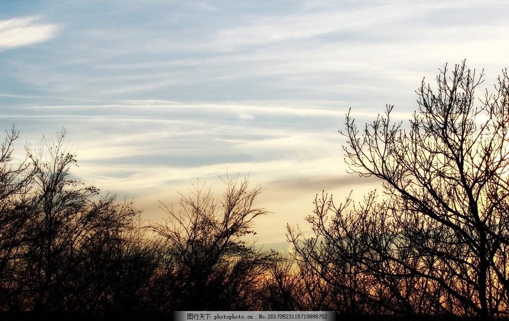 日落 景观 树木 剪影 性质 森林 天空 秋季 心情 晚上 黄昏