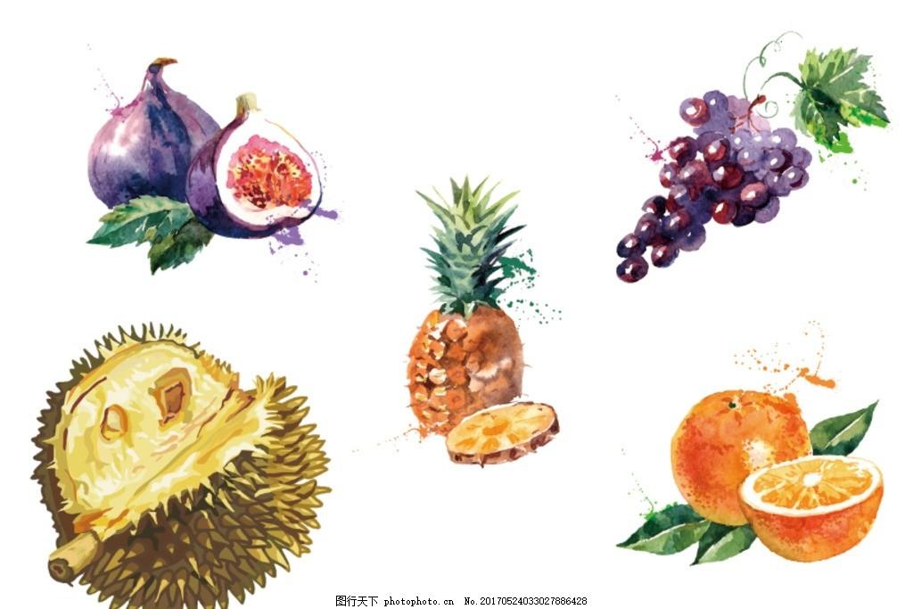水彩榴莲 百香果 菠萝 西柚 水果 水彩 榴莲手绘 手绘水果 设计 psd分图片
