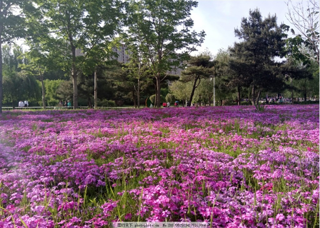 春天花枝 春天 花枝 春日 春季 春光 花树 开花 树枝 花卉 草木 植物