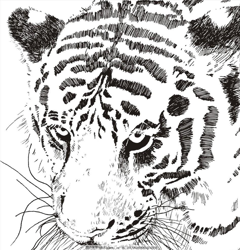 布料印花 图腾 纹身 野生动物 老虎 白虎 手绘老虎 动物 老虎矢量图