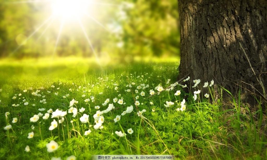 草地 草坪 森林 花 草地 草坪 公園 朝陽 日出 樹林 樹木 草 山丘上的草 山丘上的樹木 陽光穿透樹林 陽光穿過樹林 藍天白云草地 藍天草地 藍天下的草地 樹蔭 太陽 陽光 寧靜自然 安靜 平靜 風景 美景 大自然 攝影 自然景觀 自然風景 設計 廣告設計 廣告設計 72DPI JPG