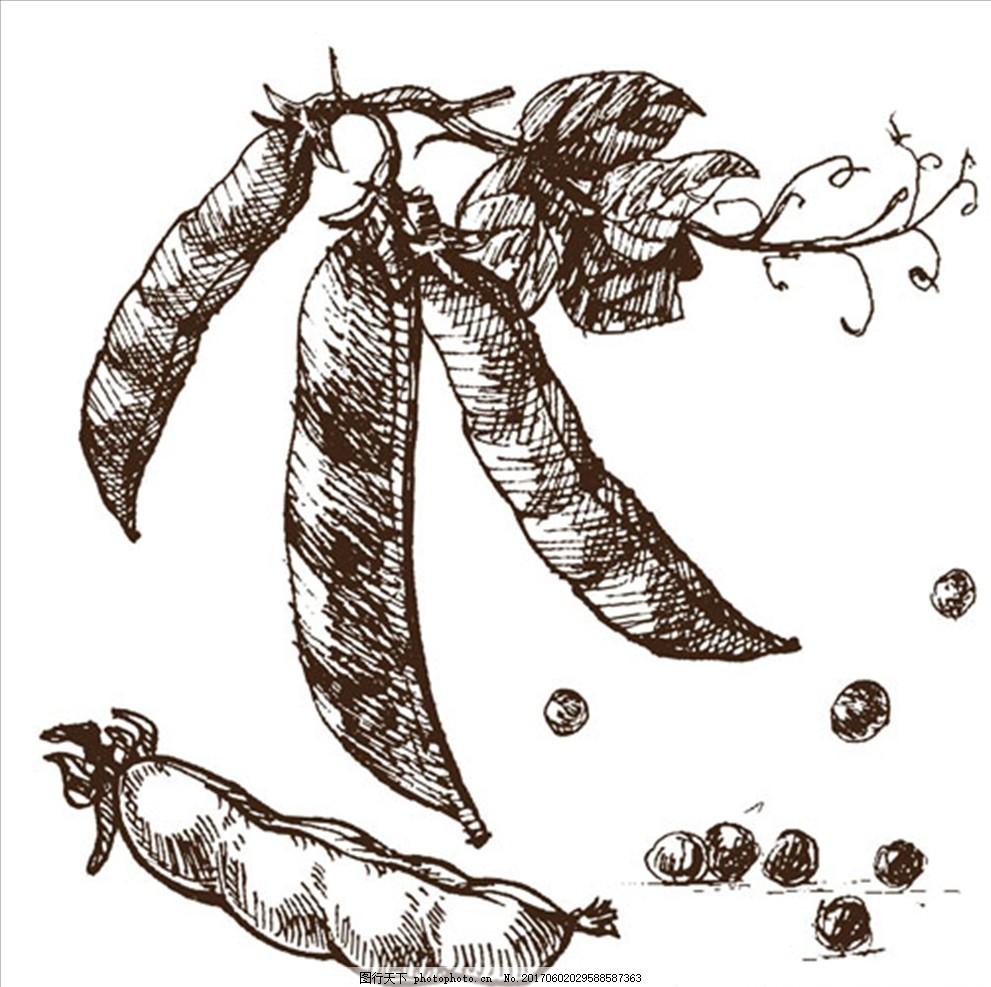 豌豆手绘素描插图