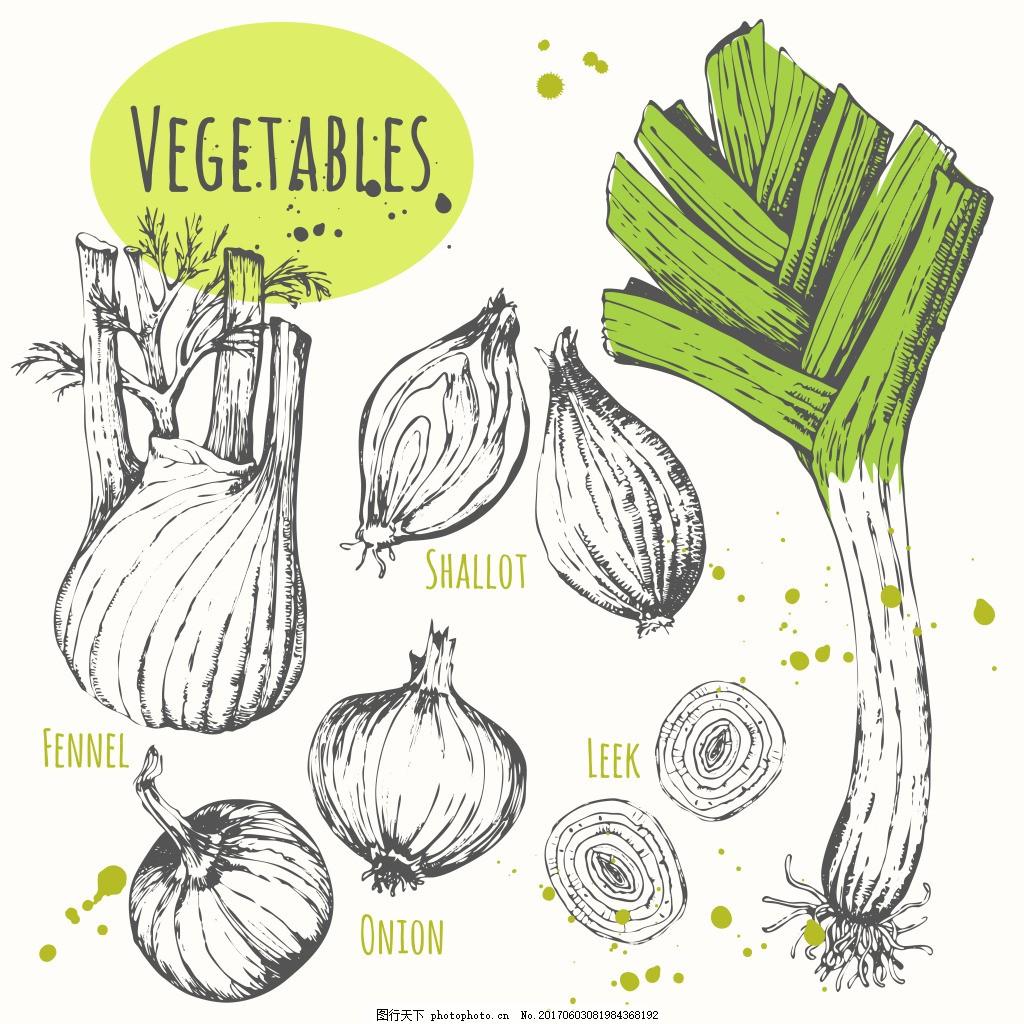 手绘调味蔬菜插画 素描 大蒜 大葱 洋葱