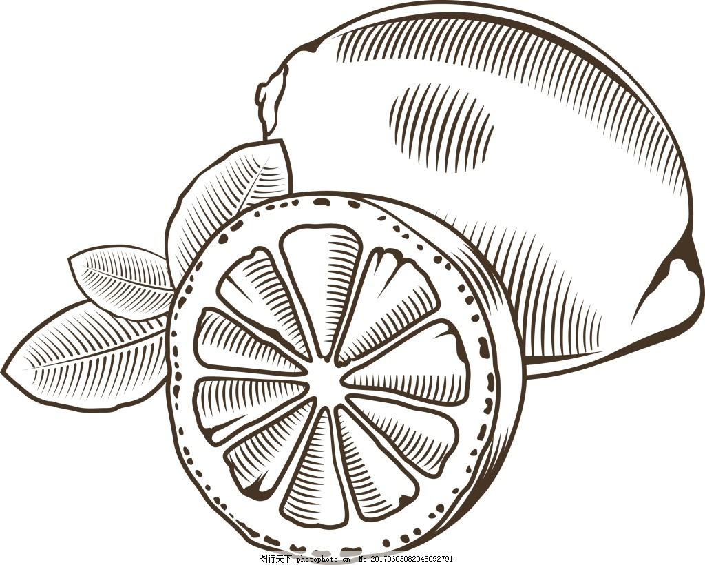 黑白手绘柠檬插画 水果 素描 切开图片