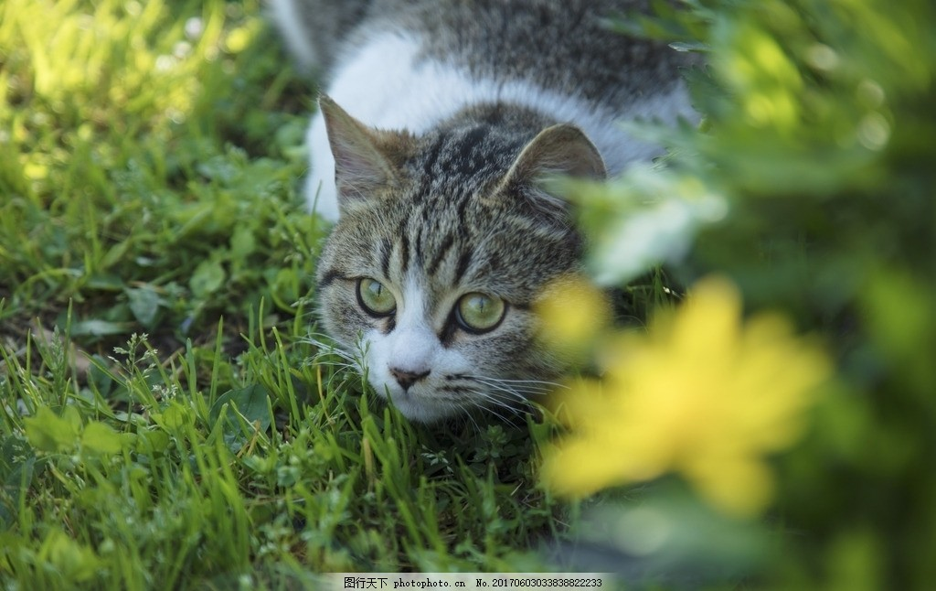 猫咪 猫 可爱的 动物 小清新 高清 背景 插画 日系 毛皮 特写 小猫 插