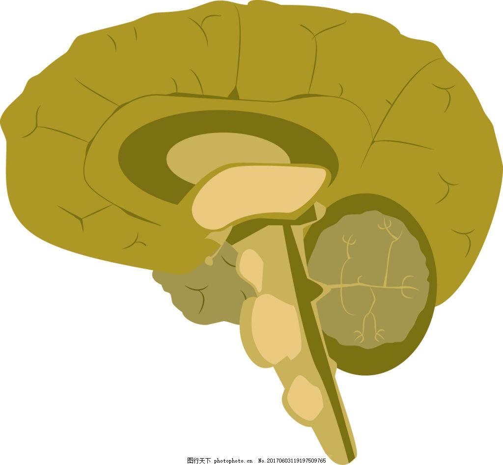 大脑 大脑结构 人的大脑 脑部结构