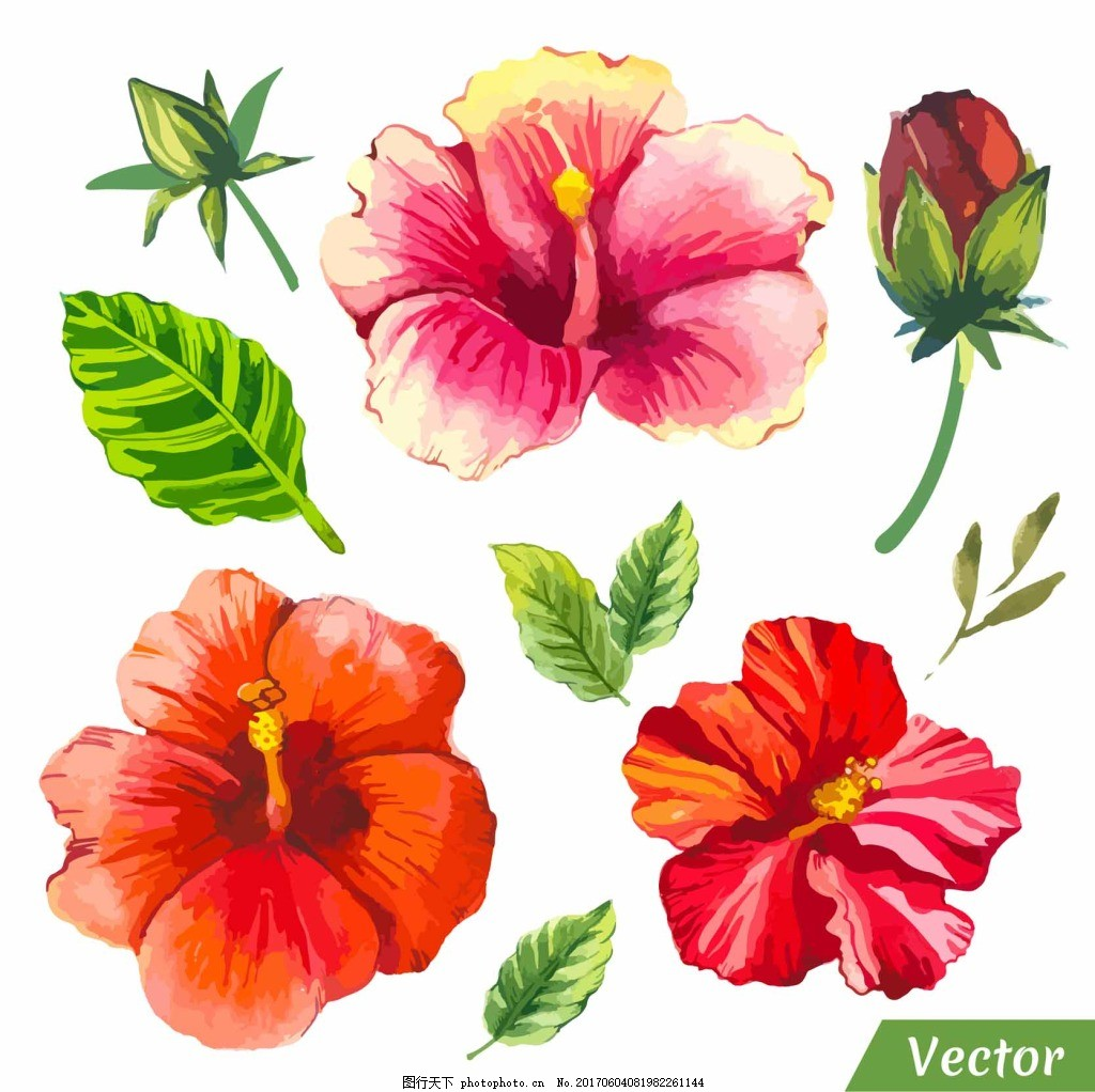 水彩花朵插画 植物 叶子 手绘 绿色 红色花朵