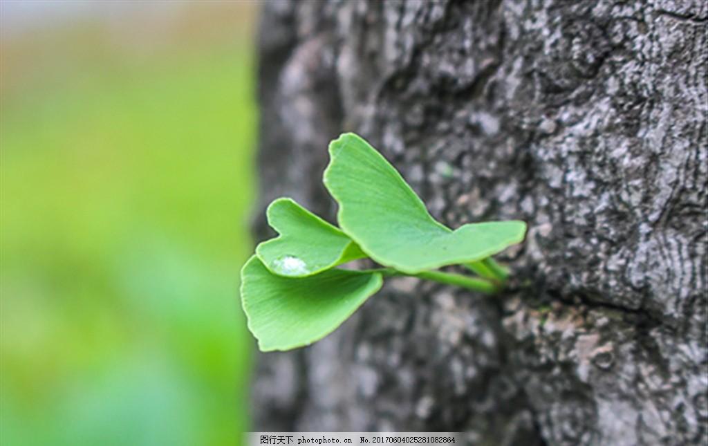 新生小苗 发芽 生命 树芽 成长 小树苗 树发芽 摄影