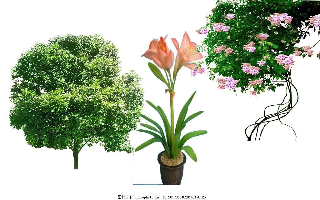 绿化植物花藤素材 醉香含笑花 紫藤花 朱顶红 园林景观树 绿化环保