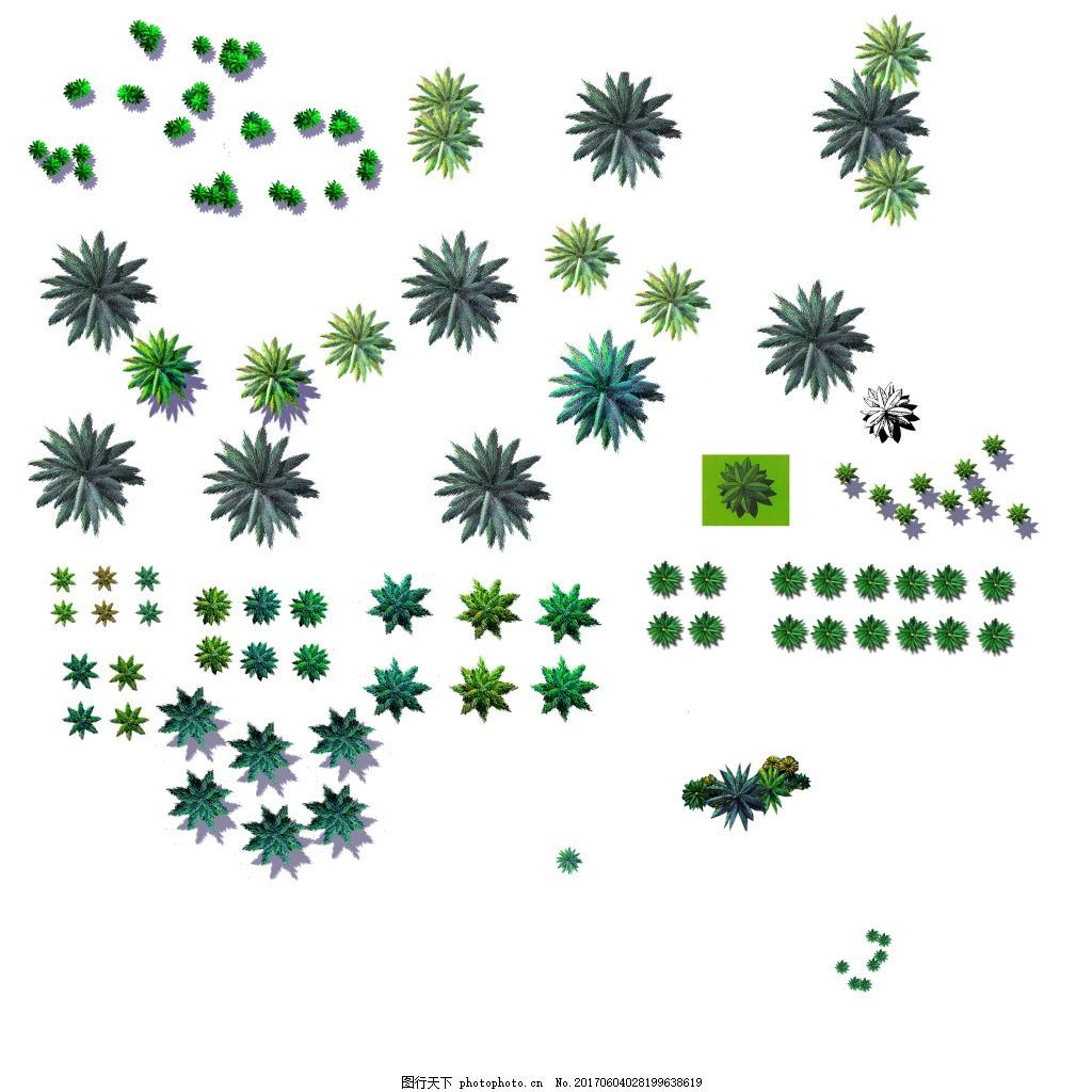 植物平面图素材--乔木 (15)