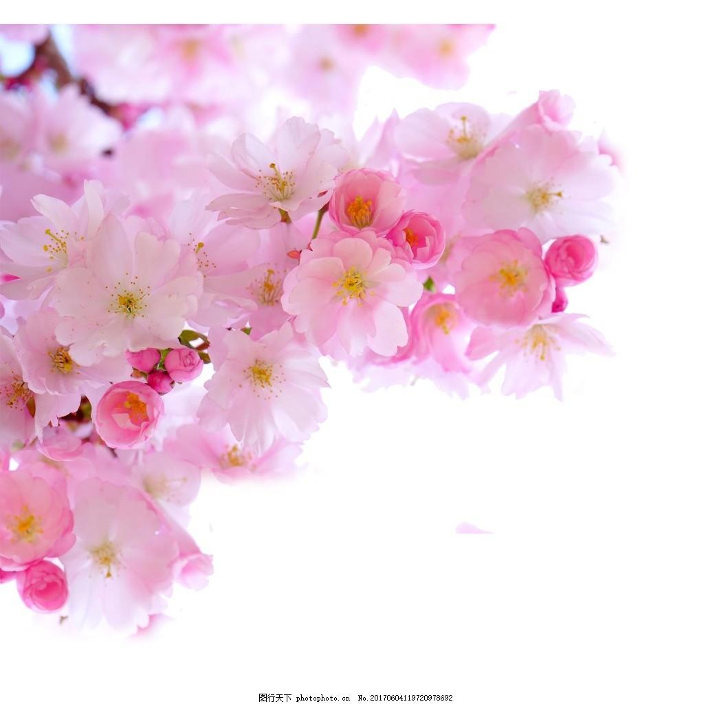 手绘浪漫花朵元素 手绘 粉色 清新 浪漫 花朵 素材