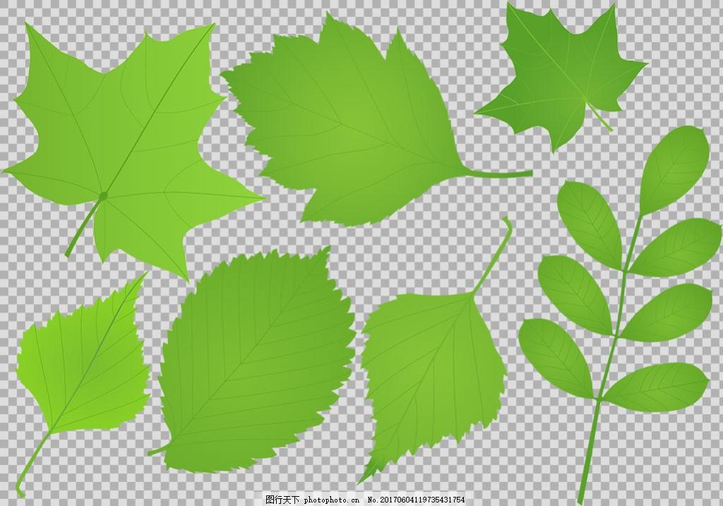 手绘各种叶子插画免抠png透明图层素材 春天素材 清新树叶 植物 绿色