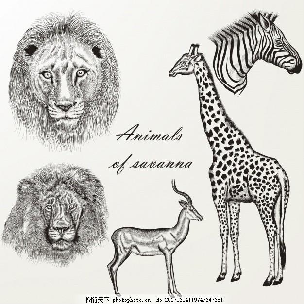 长颈鹿和其他手绘野生动物 手 自然 动物 手绘 狮子 绘画 长颈鹿 斑马