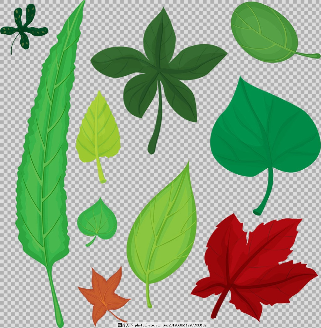 各种叶子插画免抠png透明图层素材 春天素材 清新树叶 植物 绿色叶子