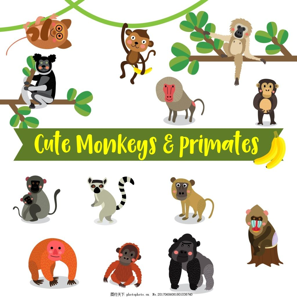 可爱的猴子的动物卡通在白色背景插图