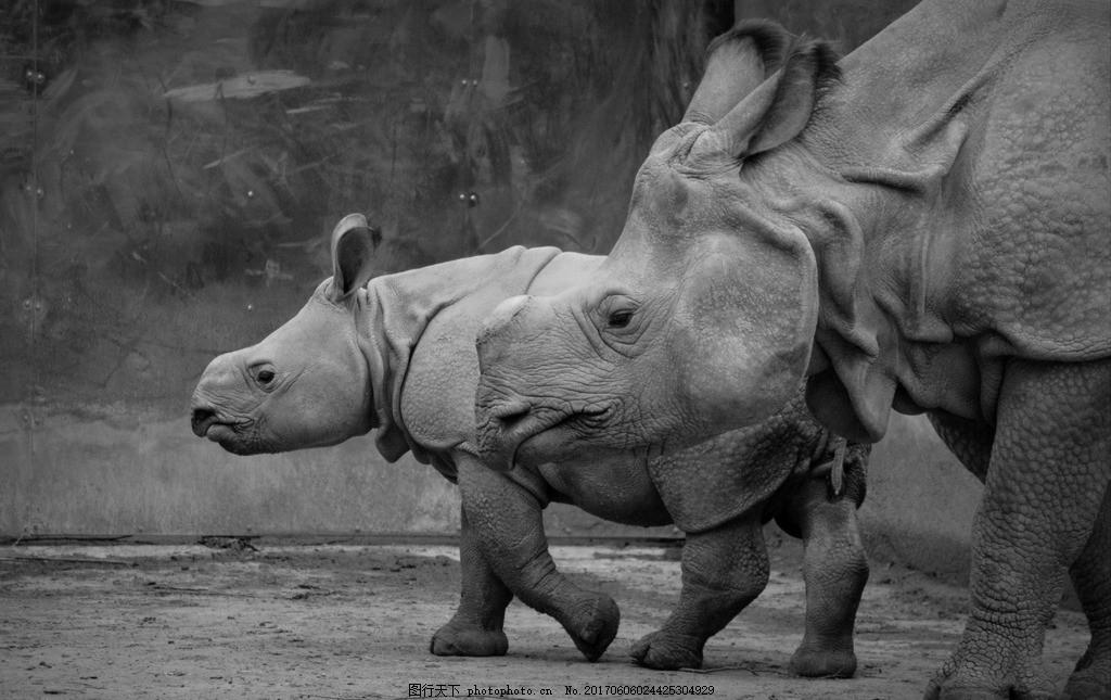 犀牛 草原动物 非洲动物 濒危动物 摄影