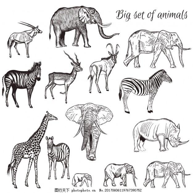 徒手收集野生动物 手绘 大象 长颈鹿 斑马 画 犀牛 瞪羚