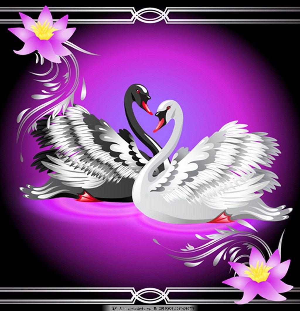 漂亮黑白天鹅背景图