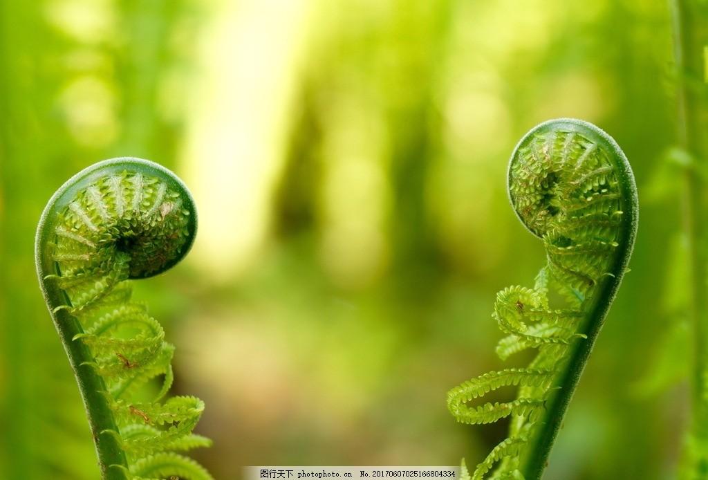 小清新蕨类植物