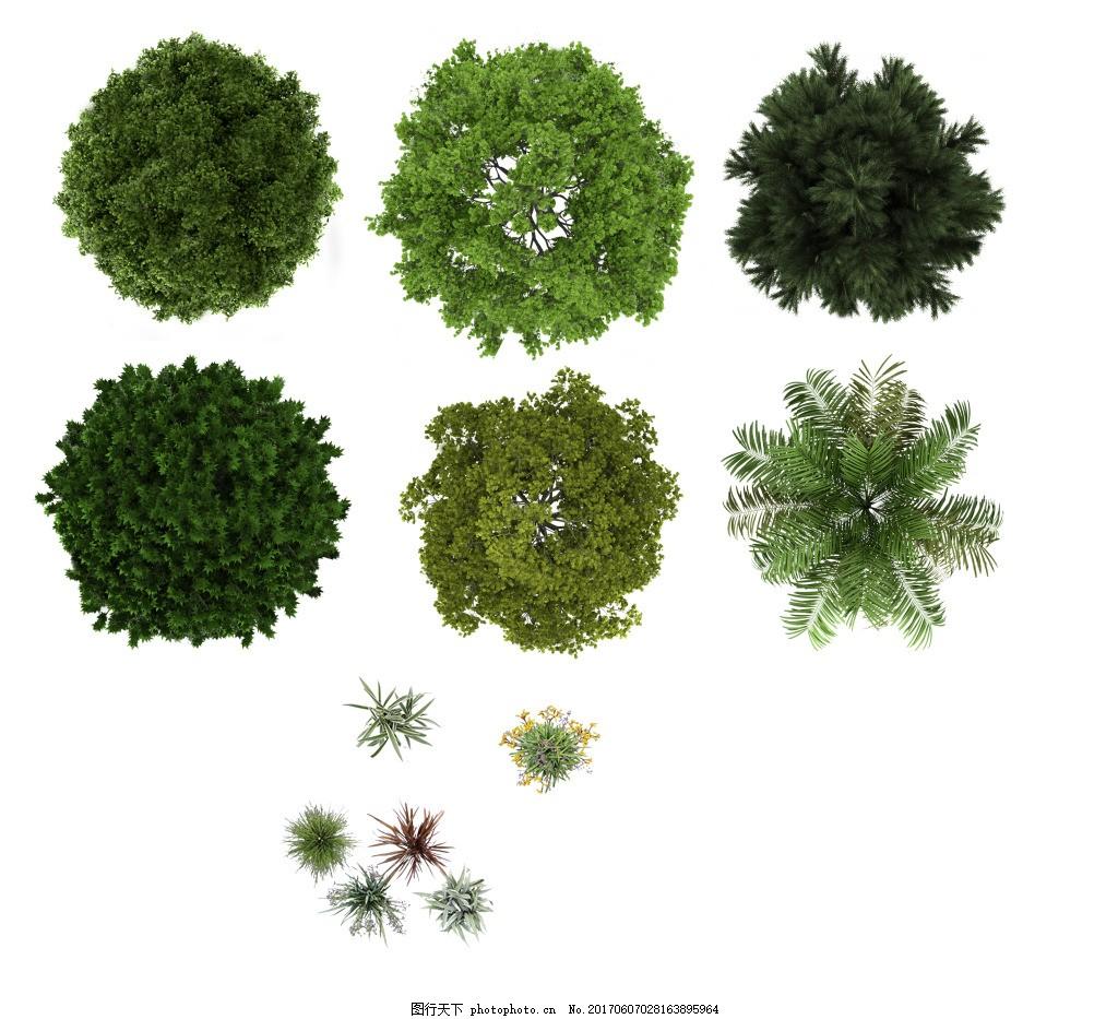 植物平面图素材--乔木 (14)