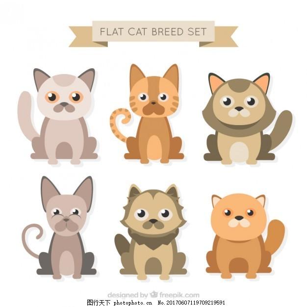 可爱的扁猫品种 设计 房子 自然 动物 猫 可爱 平板 宠物 平面设计