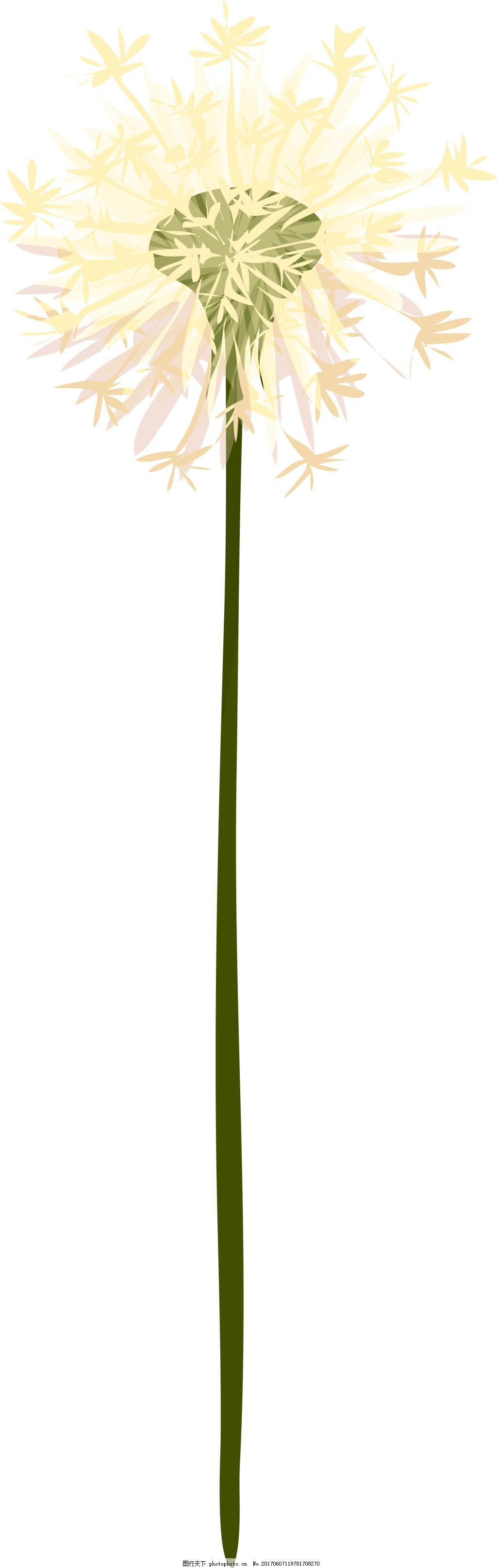 蒲公英卡通植物矢量素材 小清新 白色 花朵 绿叶 水彩 手绘 装饰