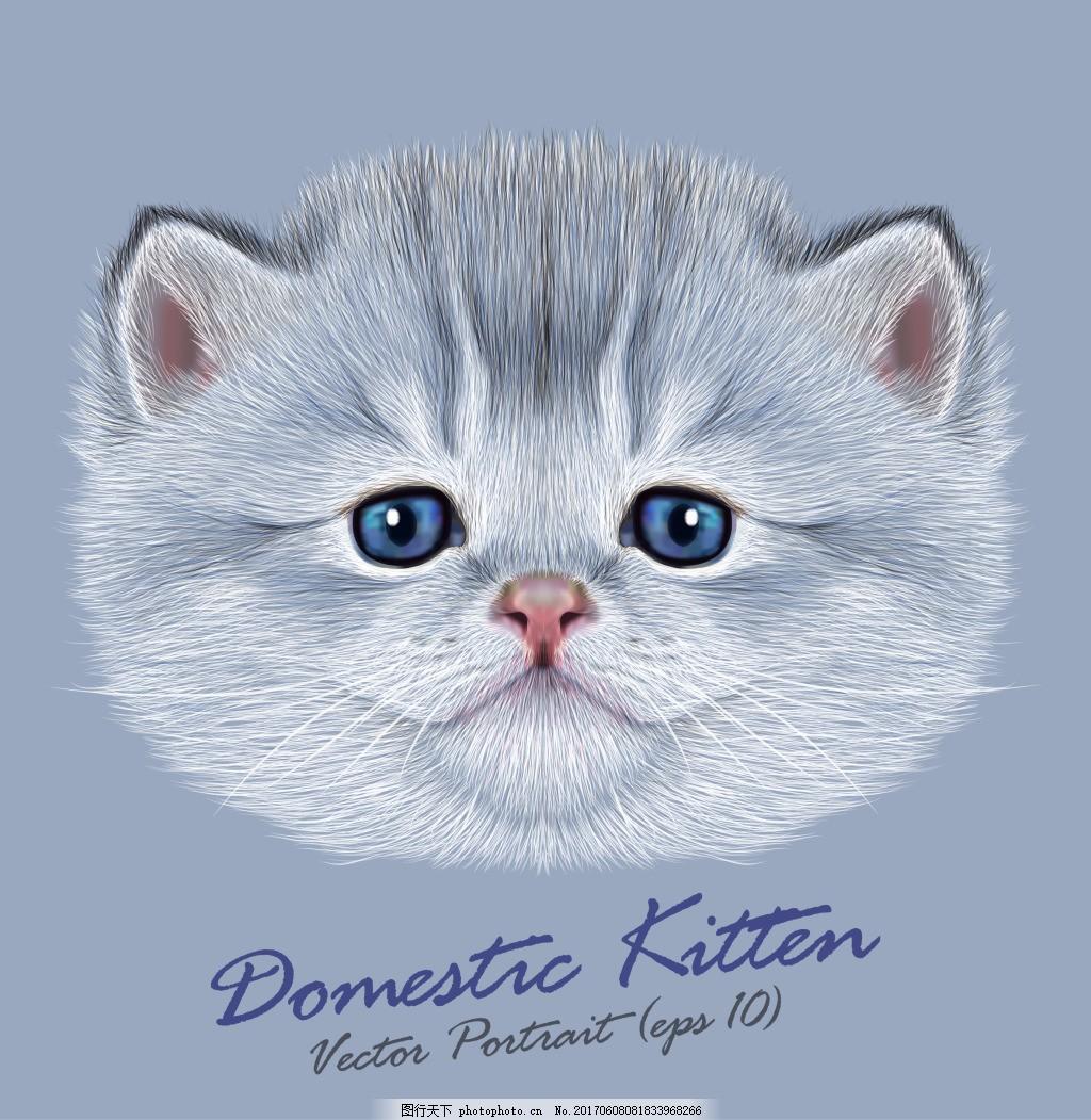 逼真胖猫咪头像插画 动物 可爱 写实 小猫