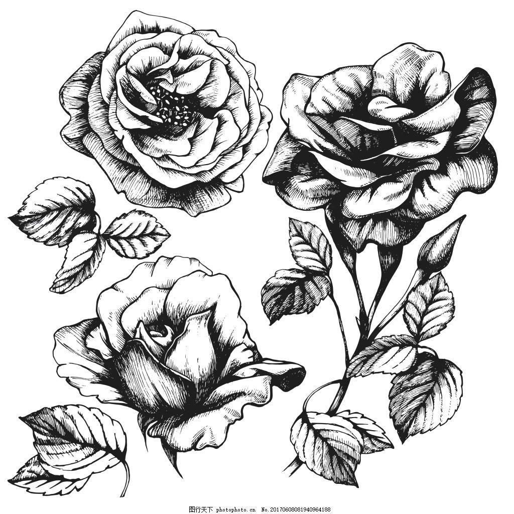 黑白手绘玫瑰花 植物 叶子 素描 爱情