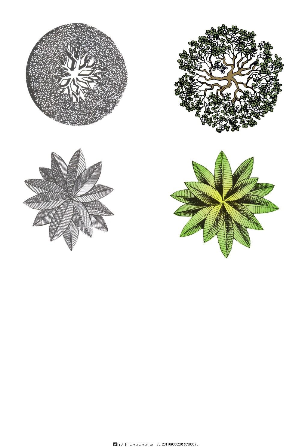 植物平面图素材--乔木 (13)