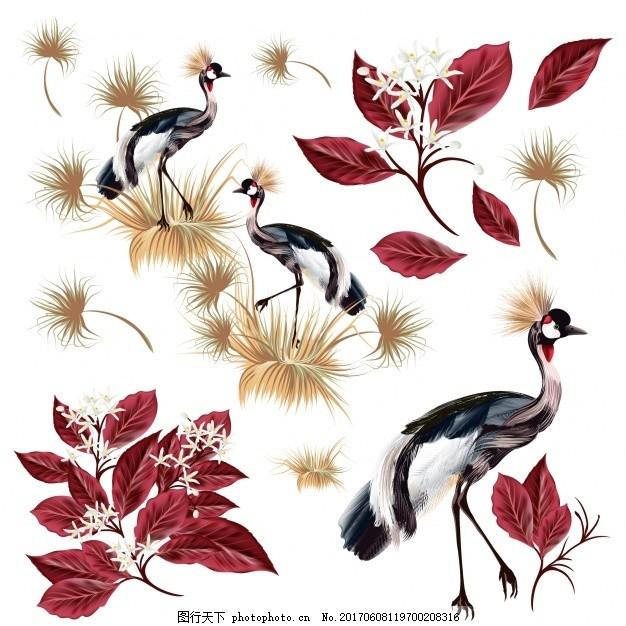 孔雀叶采集 花卉 树叶 动物 颜色 收集 彩色 有色