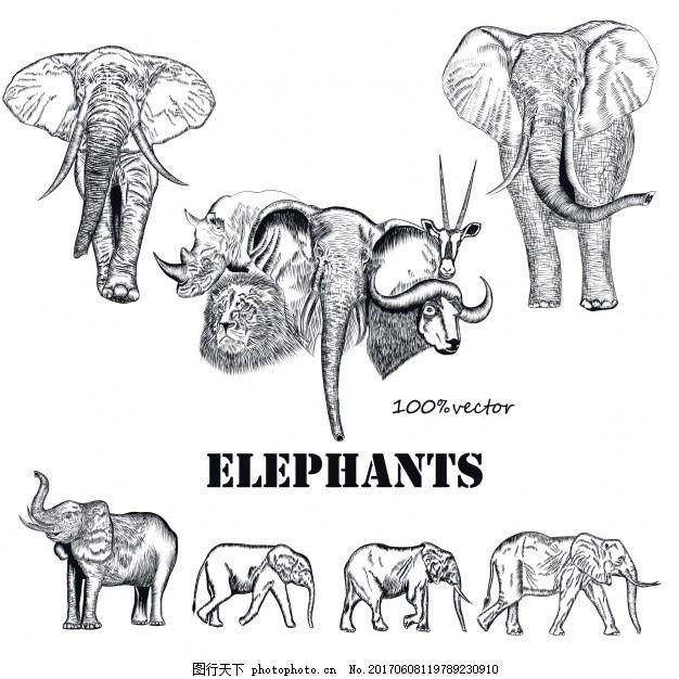 手绘大象收藏 动物 手画 素描 绘画 粗略 收集 设置