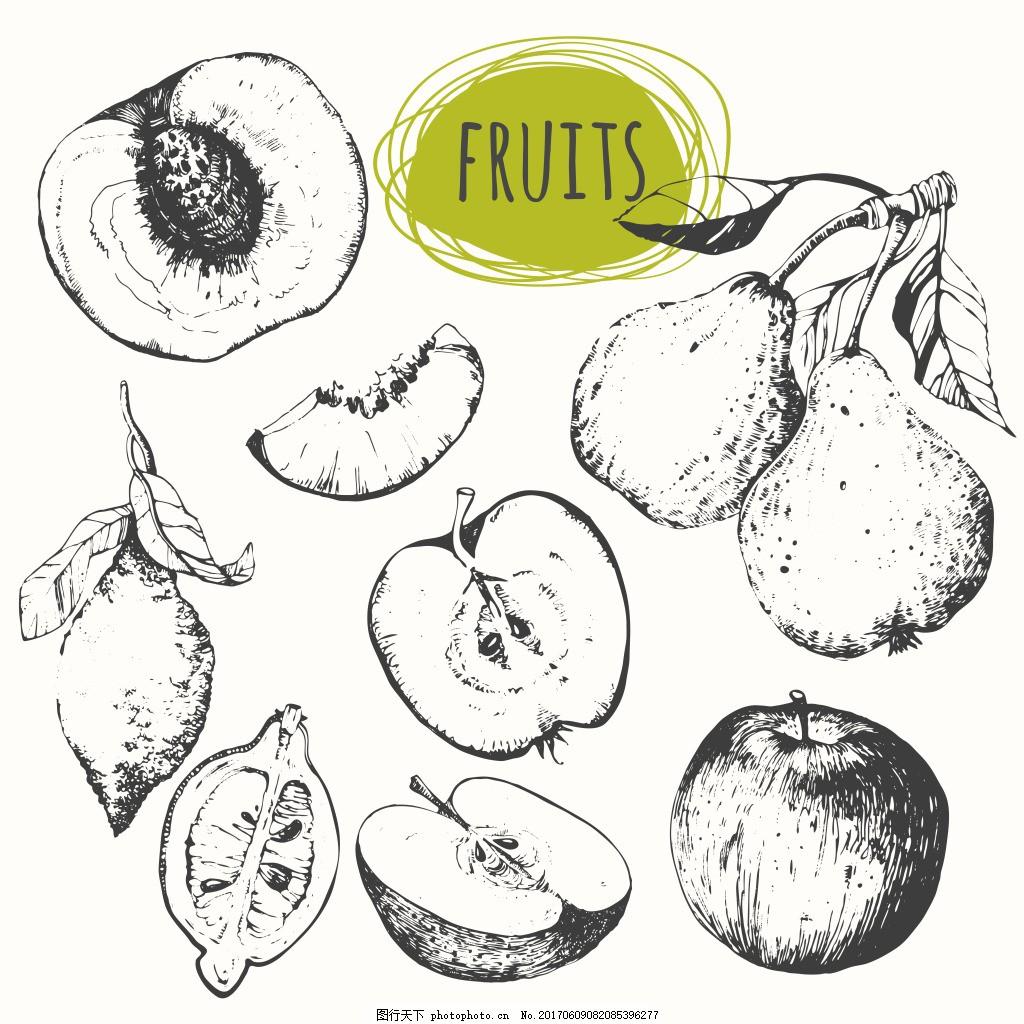 黑白手绘水果插画