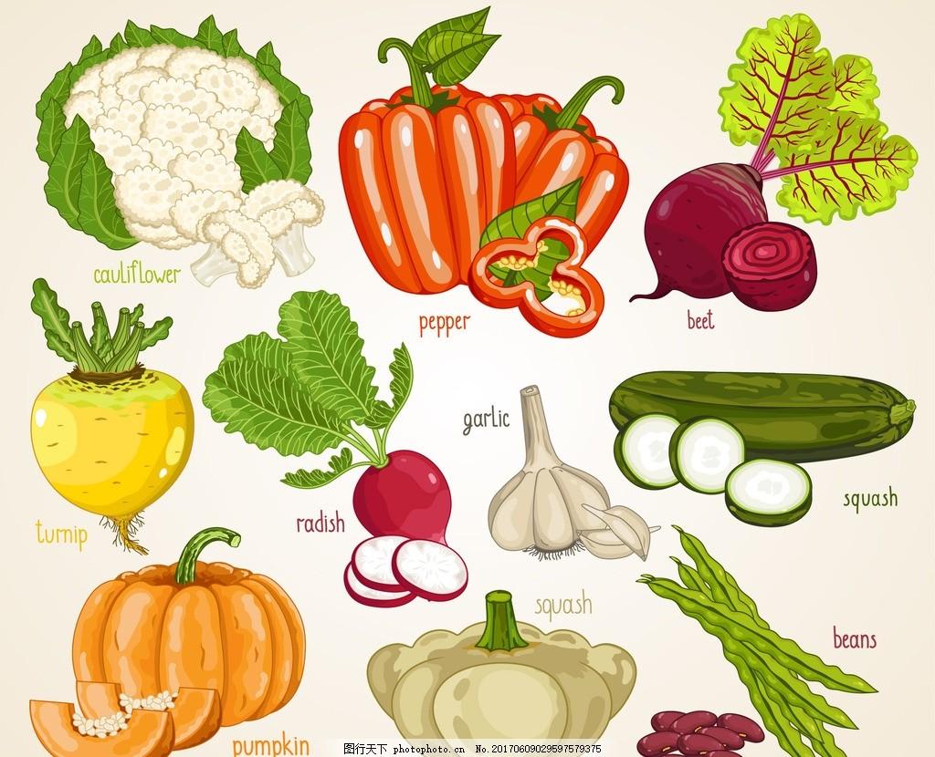 手绘蔬菜 卡通蔬菜 矢量蔬菜 黄瓜 花菜 南瓜 萝卜 芦笋 食材