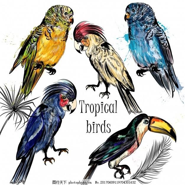 热带鸟集 水彩 手 动物 油漆 热带鸟类 鹦鹉 手画 巨嘴鸟