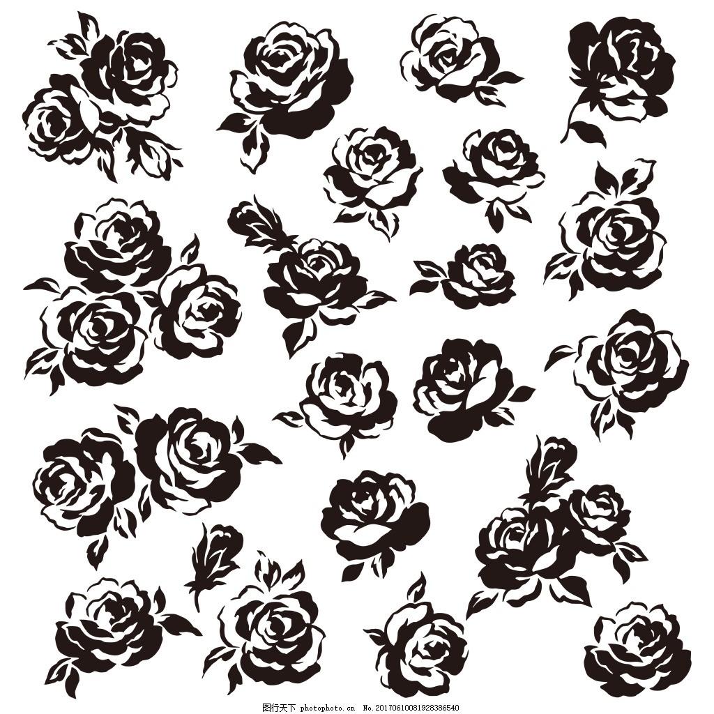 黑白玫瑰花 植物 手绘