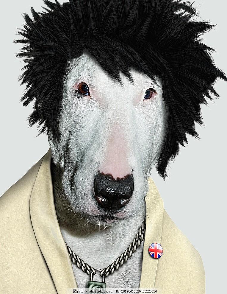 宠物表情 搞笑表情 动物角色扮演 动物搞笑 搞笑动物 动物拟人 可爱