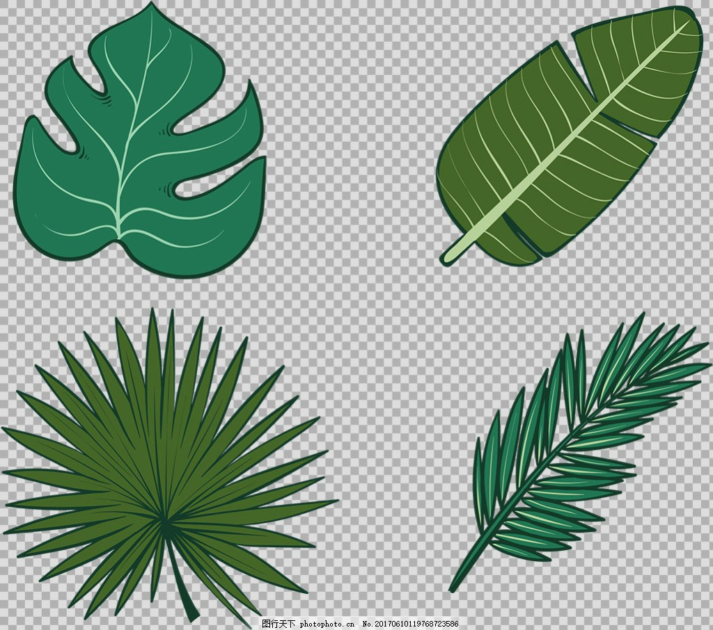 棕榈叶子插画免抠png透明图层素材 春天素材 清新树叶 植物 绿色叶子