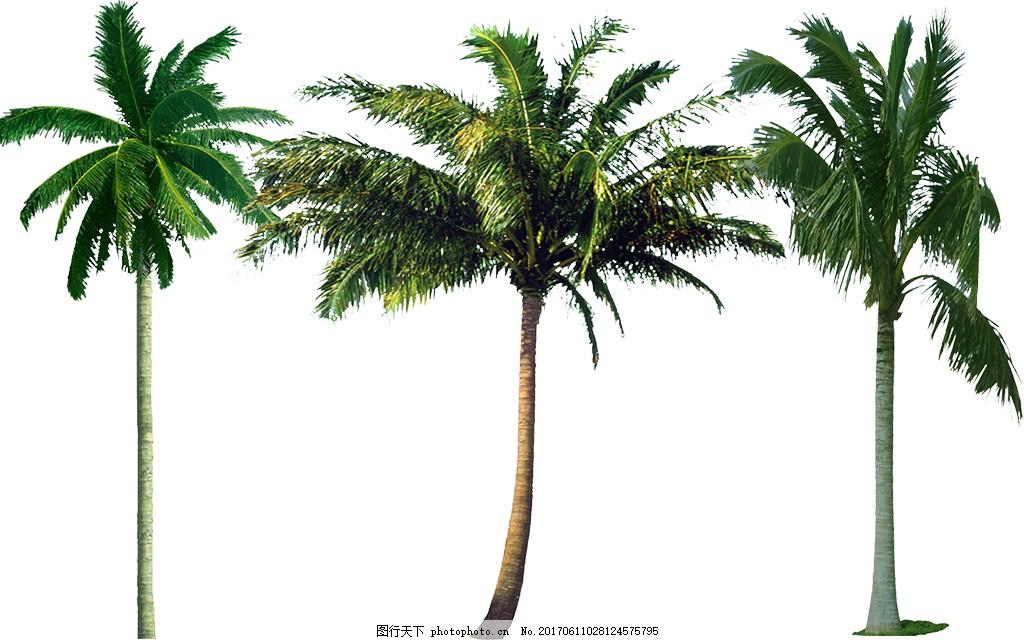 PSD椰子树源文件下载立体图片pop广告设计图片
