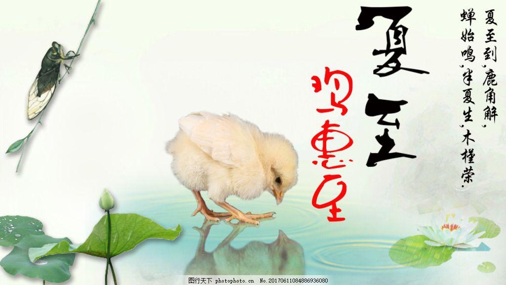 夏至小鸡海报图片